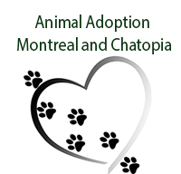 Animal Adoption Montreal, Montreal,QC Vehicle Donation Quotation Form
