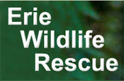 Erie Wildlife Rescue, Windsor,ON Vehicle Donation Quotation Form
