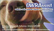 Ontario Weimaraner Rescue and Assistance (OWRAssist), St Catharines,ON Vehicle Donation Quotation Form